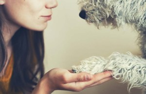 Things You Can Learn From a Dog