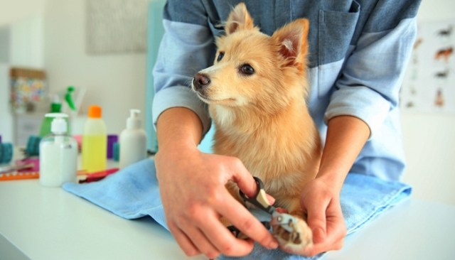 Tips for Cutting Your Dog's Nails