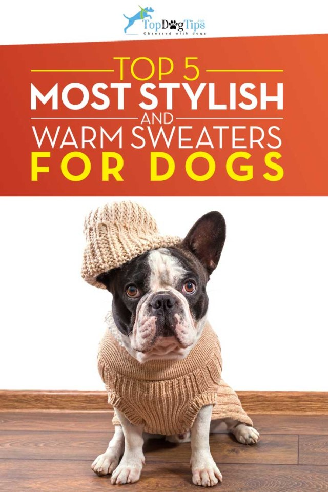 Top Best Dog Sweaters for Warmth & Style