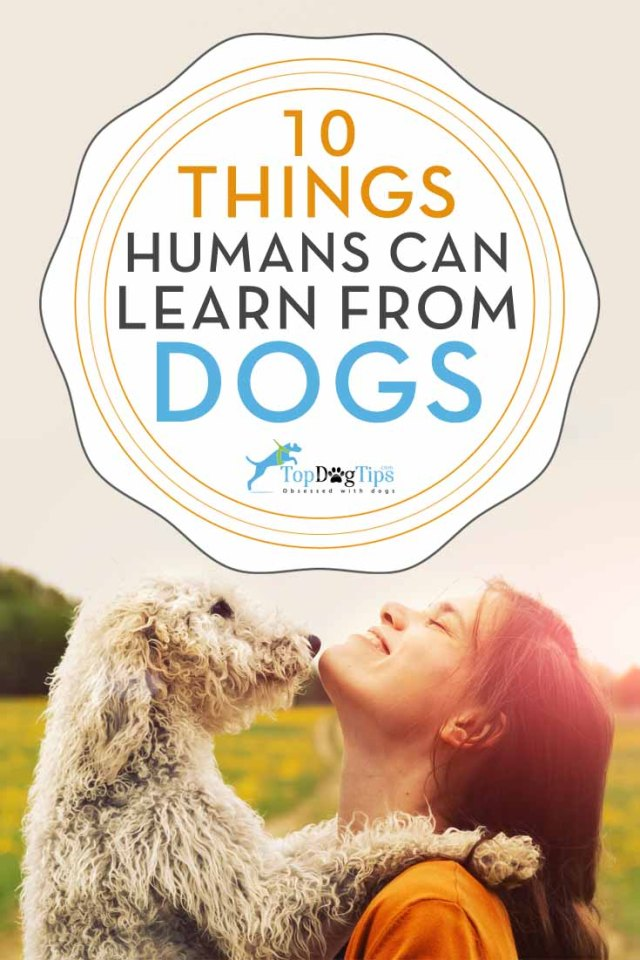 What Humans Learn from Dogs