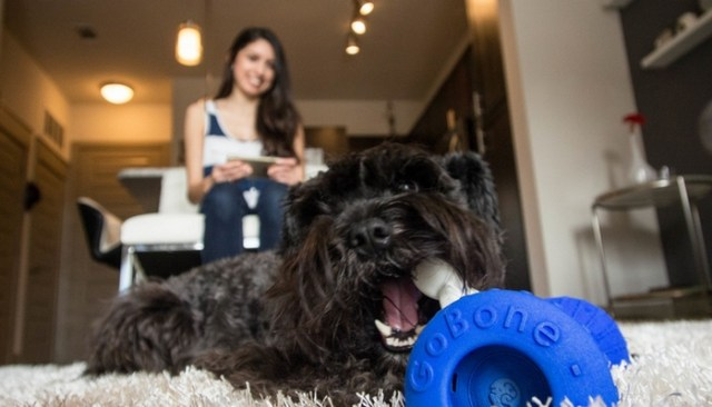 Whoa! Wait Until You See What This Dog Toy Can Do!