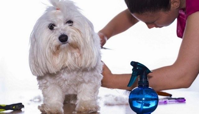 how to find the right dog groomer