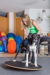 Assisted Walking for Dog Paralysis