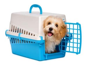 Choose the best dog crate