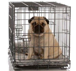 Dog crate as punishment