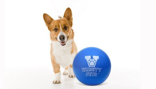 Guaranteed Indestructible Dog Toy No Way