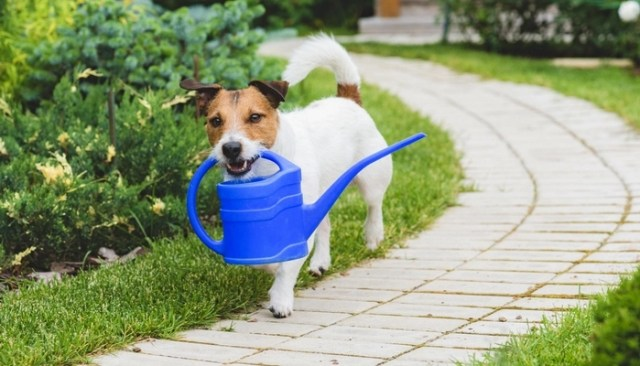 Have You Considered Planting a Dog-Safe Garden