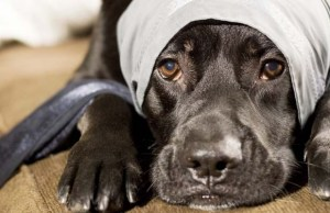 Providers of the Best Pet Insurance for Dogs Plans