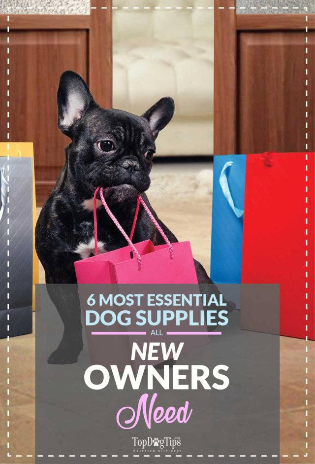 Supermarket Dog Supplies for New Pet Owners