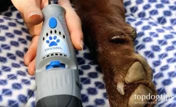 Using dremel to file dog nails