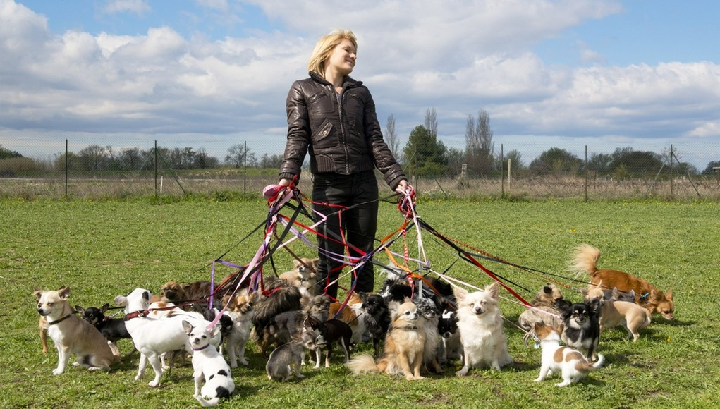 Where and How to Pick Dog Walking Insurance