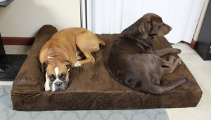 My dogs tried the Big Barker Dog Bed