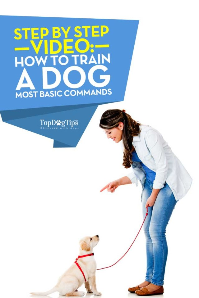 Tips on How To Train A Dog Basic Commands