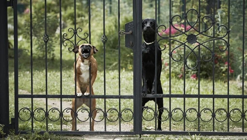 Best Watch Dogs