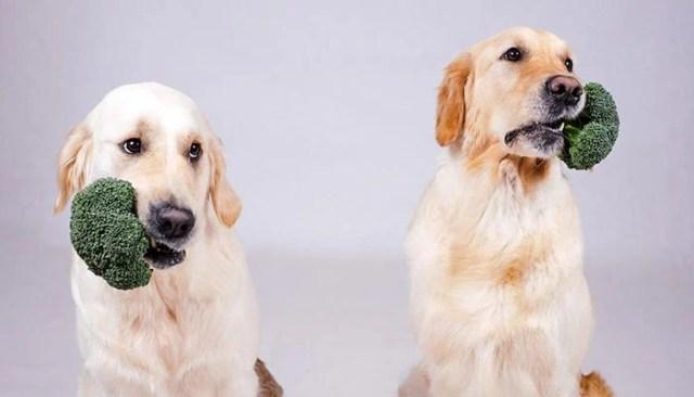 Can dogs be vegan or vegetarian