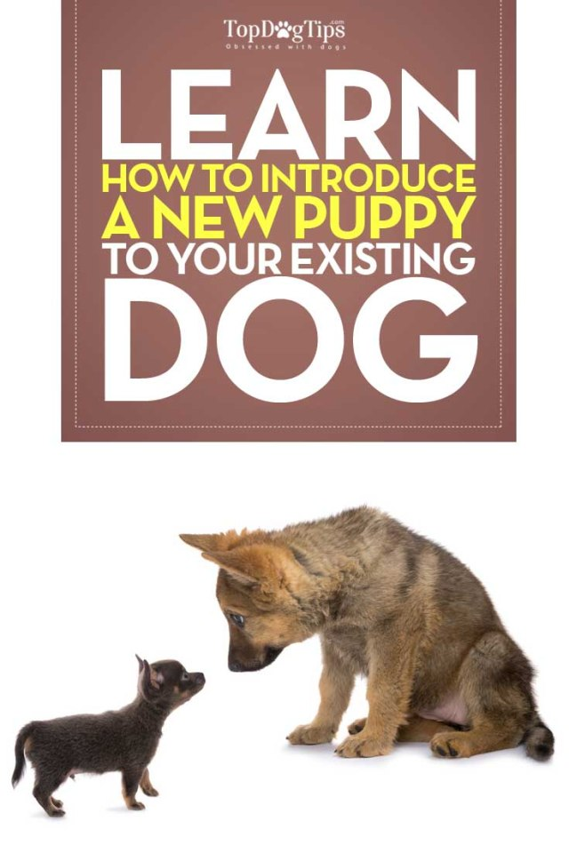 Guide on How To Introduce Your Puppy To An Existing Dog