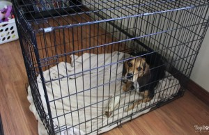 how to stop a dog from pooping in a crate
