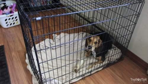 Choose a slightly larger dog crate