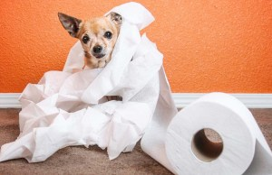 How To Toilet Train A Puppy Effectively