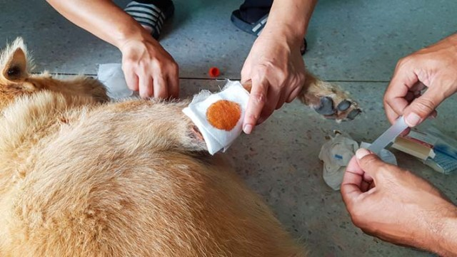 How to Clean a Dog Wound