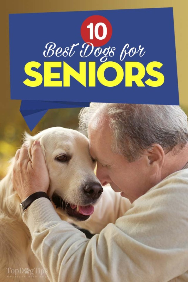 The Best Dogs for Seniors and Elderly People