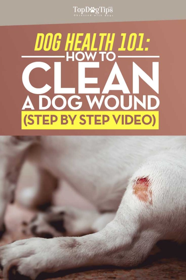 Tips on How to Clean a Dog Wound