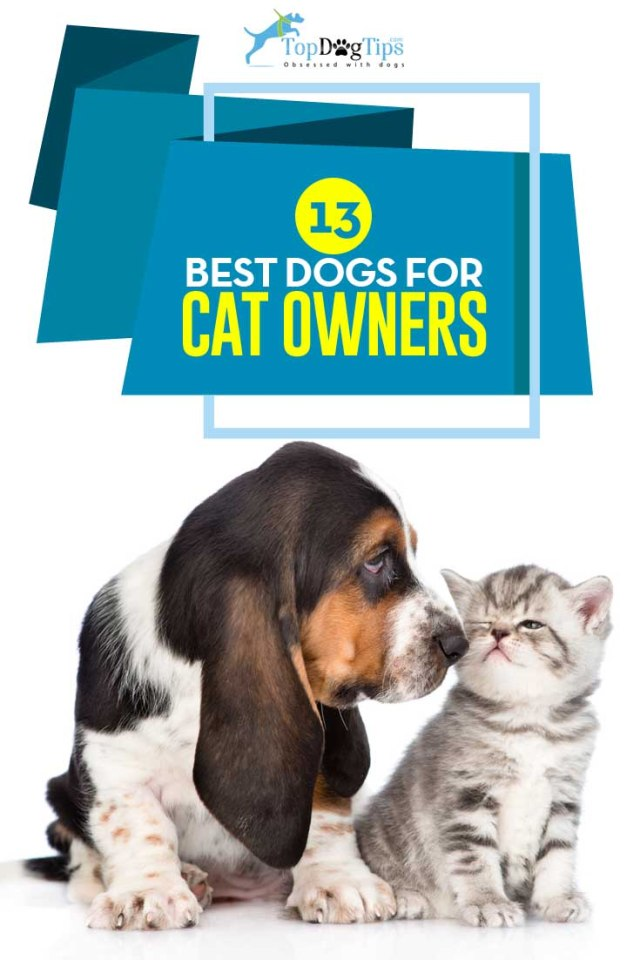 Top Best Dogs for Cats