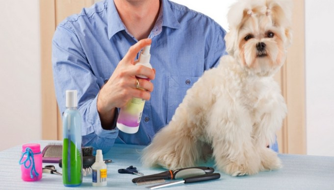 How to use the best dog cologne and deodorant for dogs?