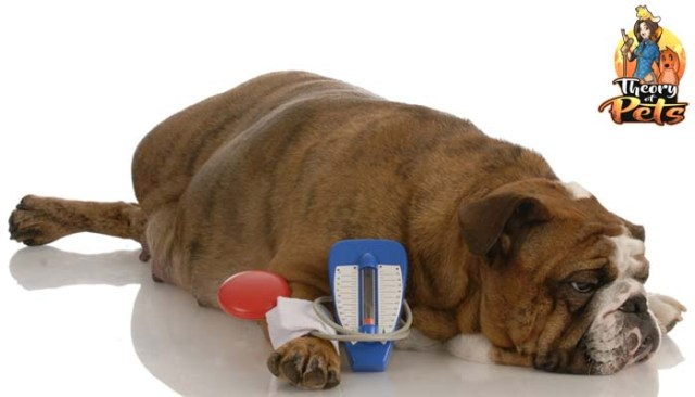 Dealing With Canine Diabetes