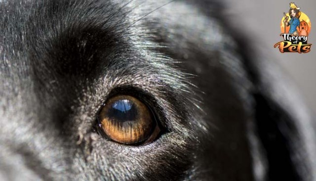 How Effective and Beneficial Are Dog DNA Tests