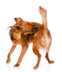 Hydrocortisone Cream To Relieve Itchiness In Dogs
