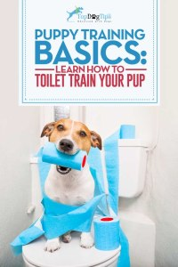 How To Toilet Train A Puppy Video
