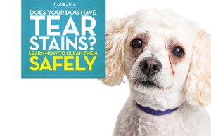 How to Remove Dog Tear Stains Naturally