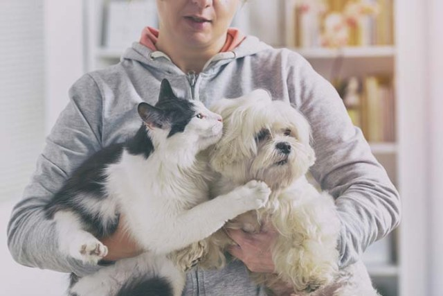 Maltese with a cat