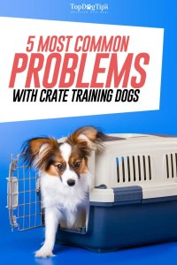 Most Common Problems with Crate Training Dogs