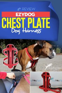 Review of EzyDog Chest Plate Dog Harness