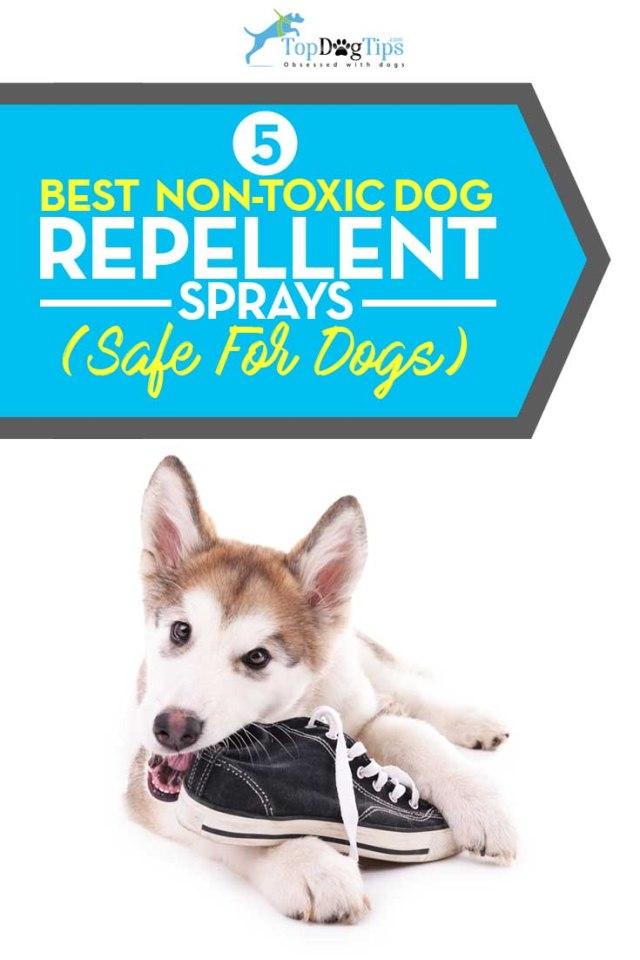 Top 5 Best Non-Toxic Dog Repellent Sprays