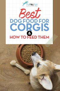 Top Best Dog Food for Corgis