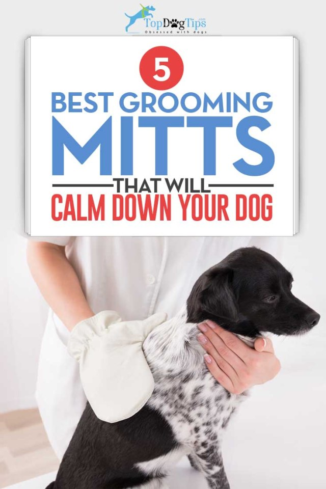 5 Top Rated Best Dog Grooming Mitts to Calm Dogs When Brushing