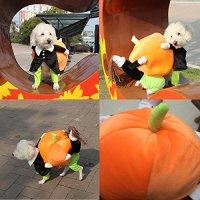 Gentleman Doggy Carrying a Pumpkin