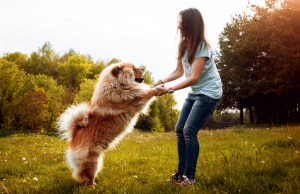 Become the Best Pet Parent For Your Dog