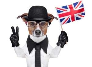 Best Dog Food UK Brands