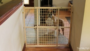 Different Types of Dog Gate Brands
