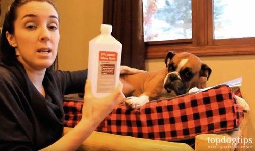 How to remove a tick from a dog safely