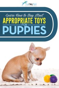 Most Appropriate Dog Toys for Puppies