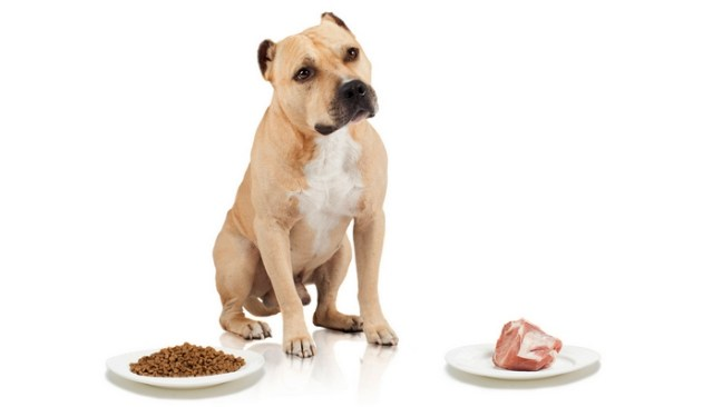 Proper Diet for Pit Bull's Muscle Gain