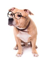 Science on over vaccination in dogs