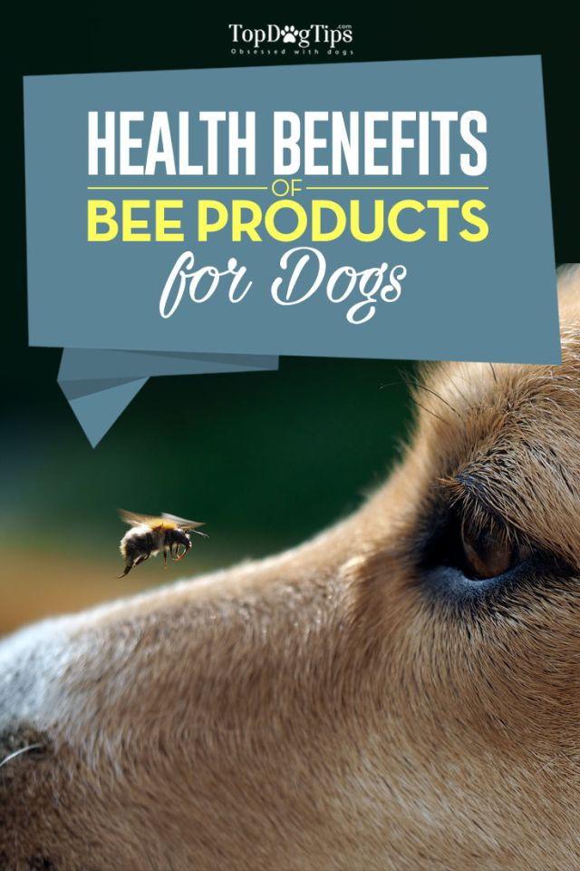Top Bee Products For Dogs