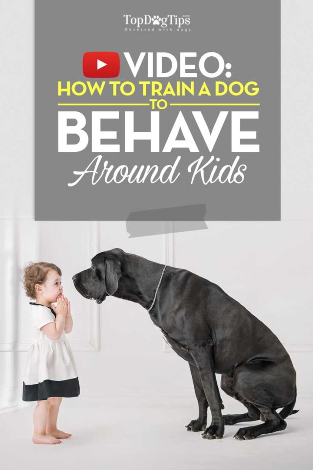 Training Dogs to Behave Around Kids