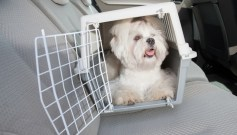 Dog carriers and dog crates are safer